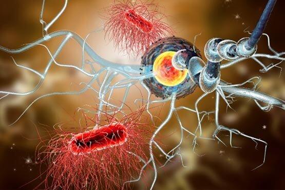 آناتومی عصب